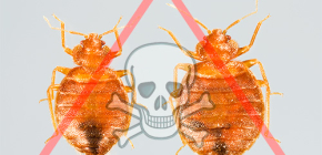Choosing the best remedy for bed bugs