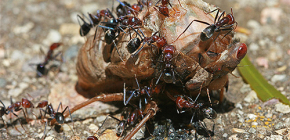 What ants eat