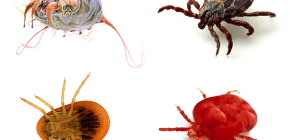 Different types of ticks and their photos