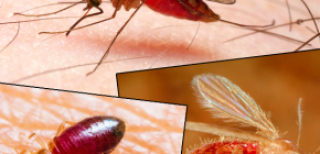 Bites of different types of insects and their photos