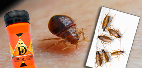 Remedy for bedbugs and cockroaches Delta Zone: description and reviews
