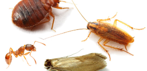 How to fight home insects in the apartment
