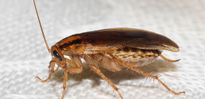 Finding out where cockroaches are gone and why they disappeared
