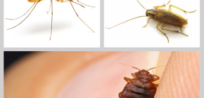 Insecticidal insect repellents in the home: a review of drugs
