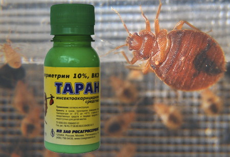 Remedy for bed bugs Ram