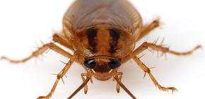 Photos of various cockroaches