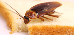 How can I get rid of cockroaches in the apartment
