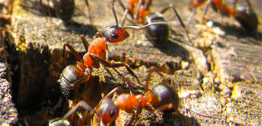 How ants are preparing for winter