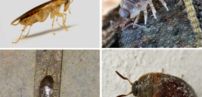 The types of insects that can live in the apartment, and their photos