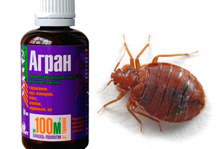 The use of Agran for the destruction of bed bugs
