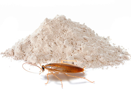 Cockroach Powders: A Review of Effective Means