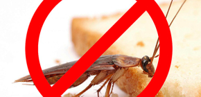 The destruction of insects: useful tips and important nuances