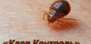 Pest Control Service Bedbug Control and Features of Its Work
