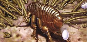 How does flea breeding