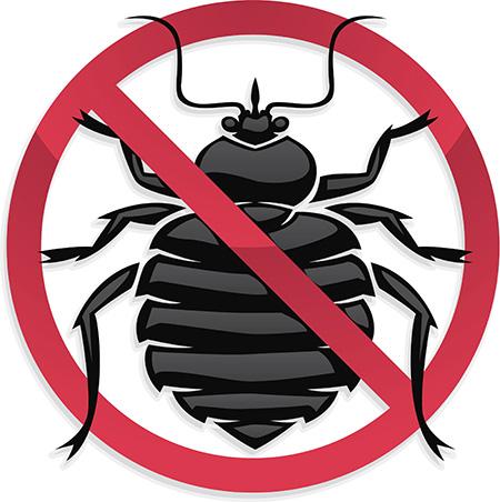 المواد الكيميائية Bedbug