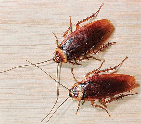 남성 바퀴벌레