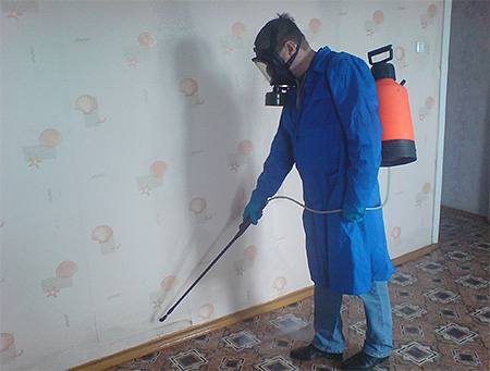 Disinsection from bedbugs by professionals - the most effective method of getting rid of insects