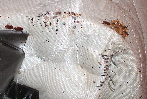 If the bugs are found in the sofa, then it can be frozen outside or treated with hot steam.