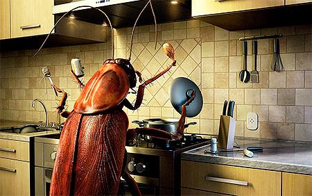 ความสะอาดในห้องครัวและในอพาร์ทเม้นโดยรวมเป็นกุญแจสำคัญในการต่อสู้กับแมลงสาบที่ประสบความสำเร็จ
