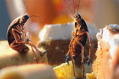 من المهم الحد من وصول الحشرات إلى حطام الطعام.