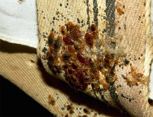 Nest de bug-uri de casa