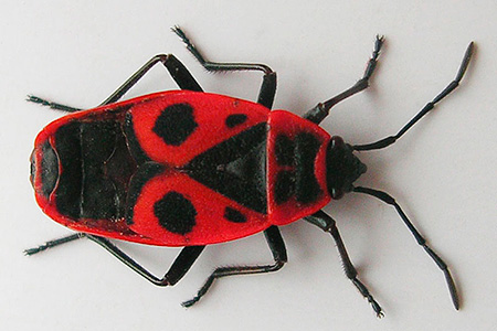 Bug-soldat