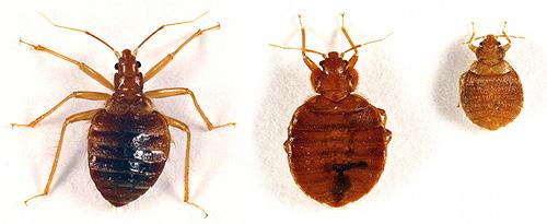 Diferite tipuri de bug-uri interne