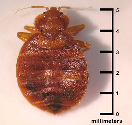 Un trup mic într-o vierme foame de formă rotundă
