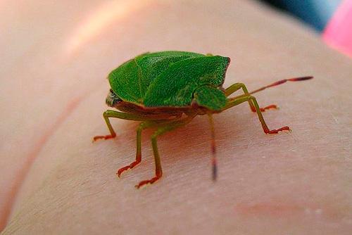 숲 벌레가 위험을 피하기 위해 집에 들어갈 수 있습니다.