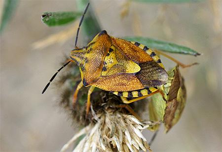 다른 종의 숲 벌레의 색깔은 크게 다릅니다.