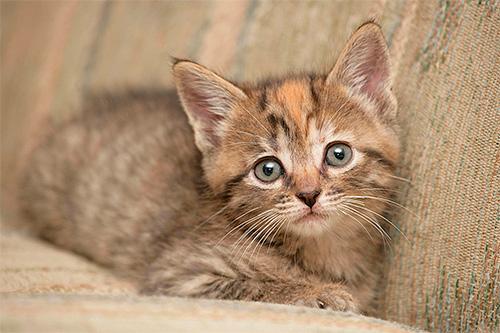 من المهم ليس فقط إحضار البراغيث من القط ، بل لجعلها آمنة قدر الإمكان للطفل.