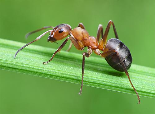 ترتبط العديد من الحقائق المثيرة للاهتمام بحياة النمل.