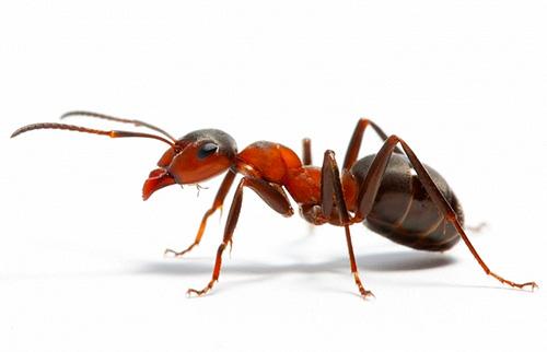 سنفهم ما يمكن أن يحلم به النمل