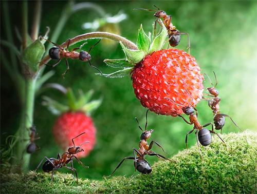 في الأدب العالمي ، يعد النمل رمزا للعمل الشاق.