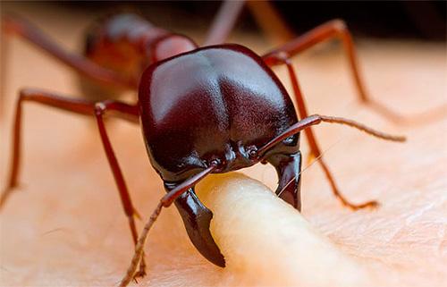إذا كان النمل في الحلم يزحف على الجسم ويعض ...