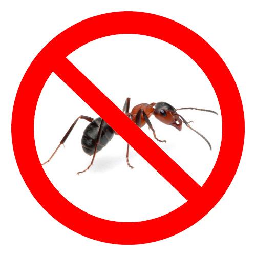 Σήμερα, υπάρχουν πολλά μέσα για την καταπολέμηση των μυρμηγκιών
