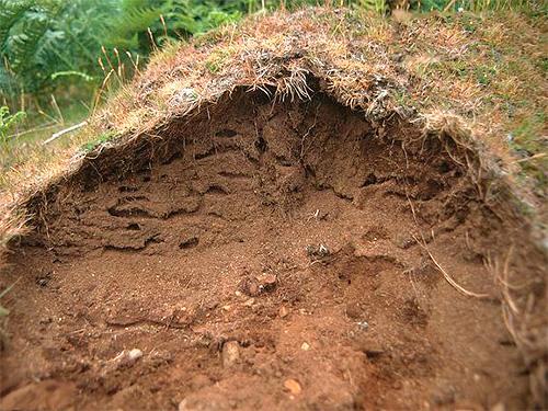 ในหลาย ๆ ชนิดของมดชีวิตในโขดหินไม่หนาวในฤดูหนาว