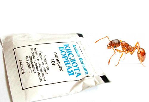 حمض البوريك هو علاج شعبي فعال للتخلص من النمل المنزلي.