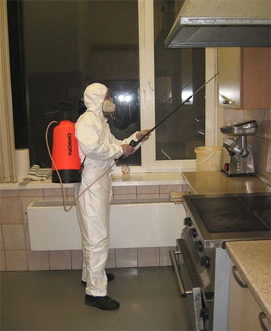 Pest control worker works flat