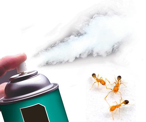 اليوم هناك أيروسولات مبيدة فعالة للغاية تدمر النمل بسرعة.
