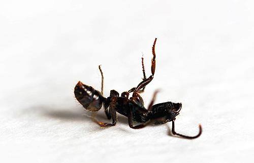 هذه الأجهزة فوق الصوتية التي يمكن أن تخيف النمل سيكون لها تأثير قوي على البشر.