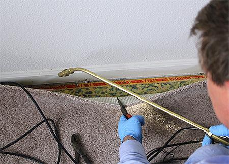 نداء لمكافحة الآفات المهنية هو أنجع وسيلة لتدمير النمل في الشقة