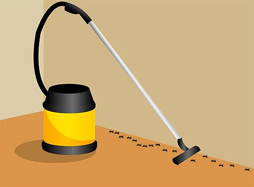 يمكنك تدمير نمل موجود في شقة مع مكنسة كهربائية