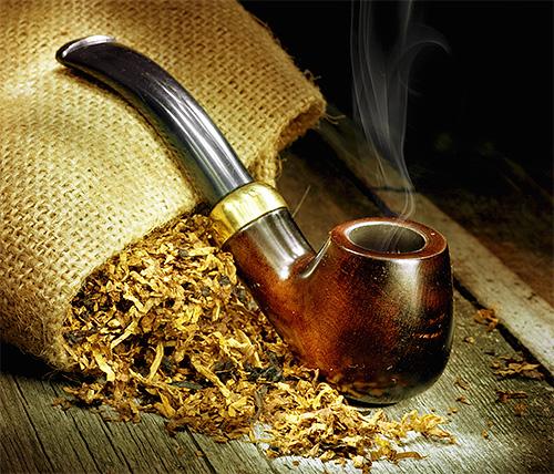 الخلد هو أيضا خائف من رائحة التبغ