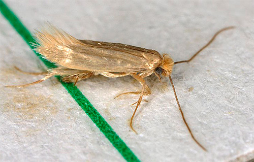 تخترق الهباءات بسرعة كبيرة الحشرات وتسبب تسممها ، لذلك يظهر التأثير على الفور تقريبا