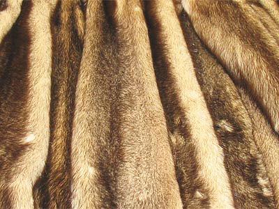 هذه البقع الأصلع النقية في معطف الفرو قضمها الخلد (بشكل أدق ، يرقاتها)