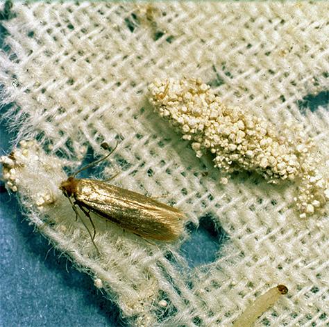 나비 애벌레와 나비