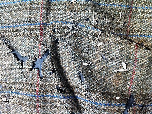 모든 나방 유충은 좋아하는 스웨터 또는 코트에 새 구멍이 있습니다.