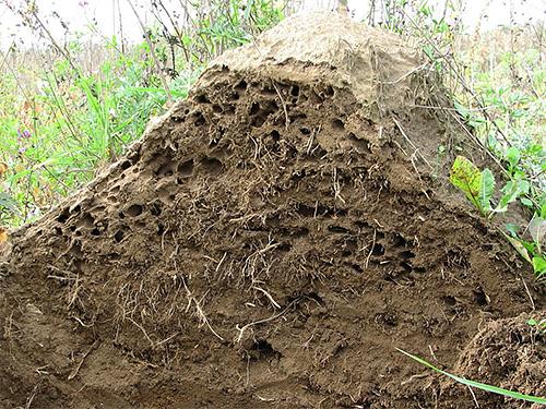 النمل هو نظام معقد وعالي التنظيم
