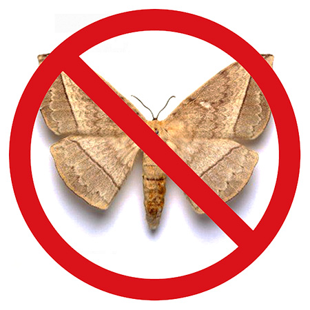 Choose the best cure for moth in the apartment